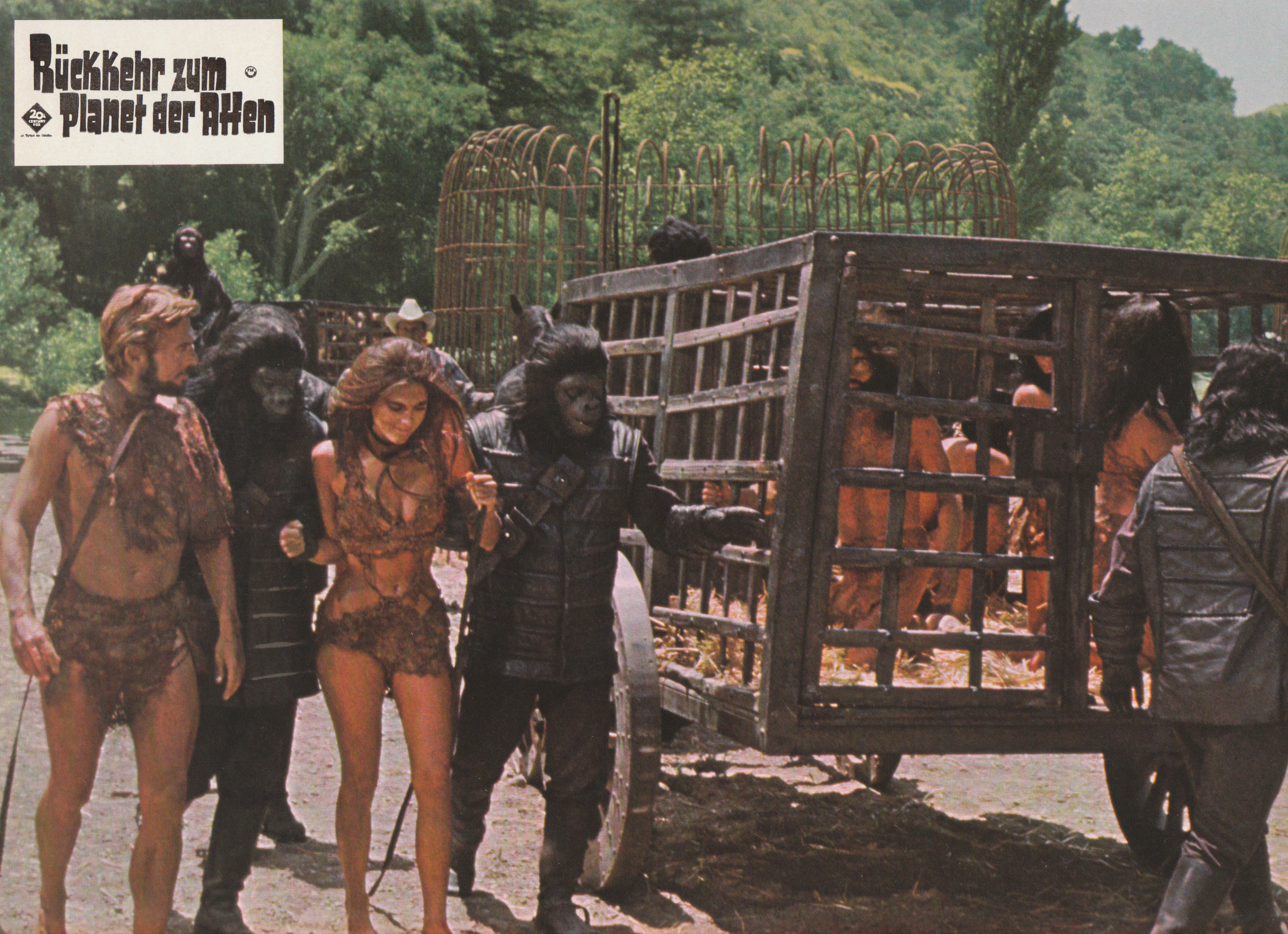 Pony the orangutan slave and the plight of primates